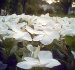 Natukaju20110629sq28mimg_0001_39_ed