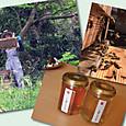 大仙養蜂園