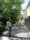 Sakuramichi01