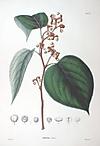 Kemponashi